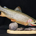 Cutthroat Trout On The Rocks by Eric Knowlton