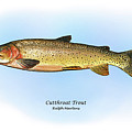 Cutthroat Trout by Ralph Martens