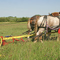 Cutting Hay by Jack Dagley