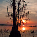 Cypress Sunset by Peg Urban
