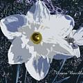 Daffodil by Norma Boeckler