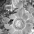 Daisy Bouquet In Black And White by Phyllis Denton