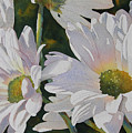Daisy Bunch by Judy Mercer