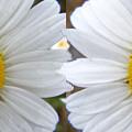 Daisy  Magic by Barbara Griffin