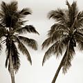 Dancing Palms by Susanne Van Hulst
