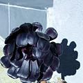 Dark Flower by Ron Bissett