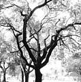 Dark Roots by Jaron R