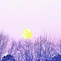 Day Light Moon by Robin Coaker