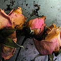 Dead Roses 2 by Kathi Shotwell