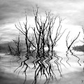 Dead Trees Bw by Susan Kinney