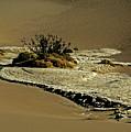 Death Valley Salt by Juergen Weiss