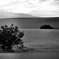 Death Valley Shrubs by Chris Fleming