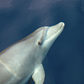 Delphin 3 by Jouko Lehto