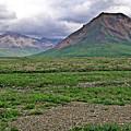Denali National Park Landscape 3 by Douglas Barnett