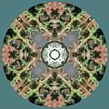 Desert Mandala by Keri Renee