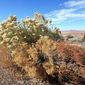 Desert Scrub by Mary Haber