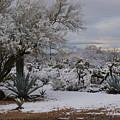 Desert Snow by Regina Arnold