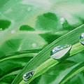 Dew Drops by Irina Sztukowski