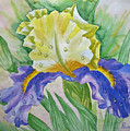 Dew Drops Upon Iris.2007 by Natalia Piacheva