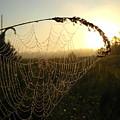 Dew On Spider Web At Sunrise by Kent Lorentzen