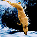 Diving Dog Underwater by Jill Reger