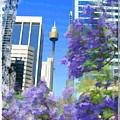 Do-00106 Spring In Sydney by Digital Oil