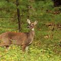 Doe A Deer by Debbie Burkhalter