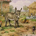 Donkey And Farmyard Fowl  by Carl Donner
