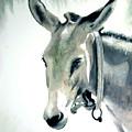 Donkey by Fiona Jack