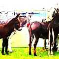 Donkeys At Mullaghmore by Sadhbh Farren