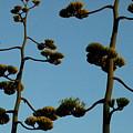 Dr Seuss Plant by Teresa Blanton