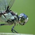Dragonfly by Tina B Hamilton