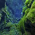 Dramatic Fluorescent Green Algae by Mathieu Meur
