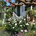 Dream Cottage In Laguna by John Loyd Rushing