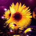 Dreams 4 - Sunflower by P Donovan