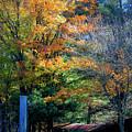 Dreamy Fall Scene by Teresa Mucha