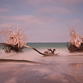 Driftwood 4121889 by Rolf Bertram