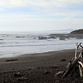 Driftwood And Moonstone Beach by Linda Woods