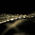 Droplets2 by Danielle Silveira