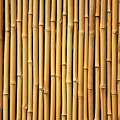 Dry Bamboo Rows by Brandon Tabiolo - Printscapes