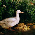 Duck And Ducklings by English School