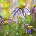Due Today Z - Dew To Daisy by Lynn Babineau