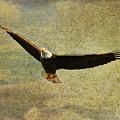 Eagle Medicine by Deborah Benoit