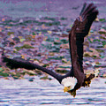 Eagle On A Mission by Clarence Alford