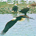 Eagle Over The River by Clarence Alford
