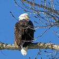 Eagle Watch by Sue Stefanowicz