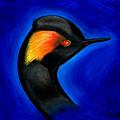 Eared Grebe Duck by Fanny Diaz