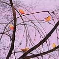 Early Spring 2 by Carolyn Doe