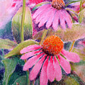 Echinacea Duo by Bill Meeker