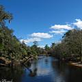 Econlockhatchee River by Barbara Bowen